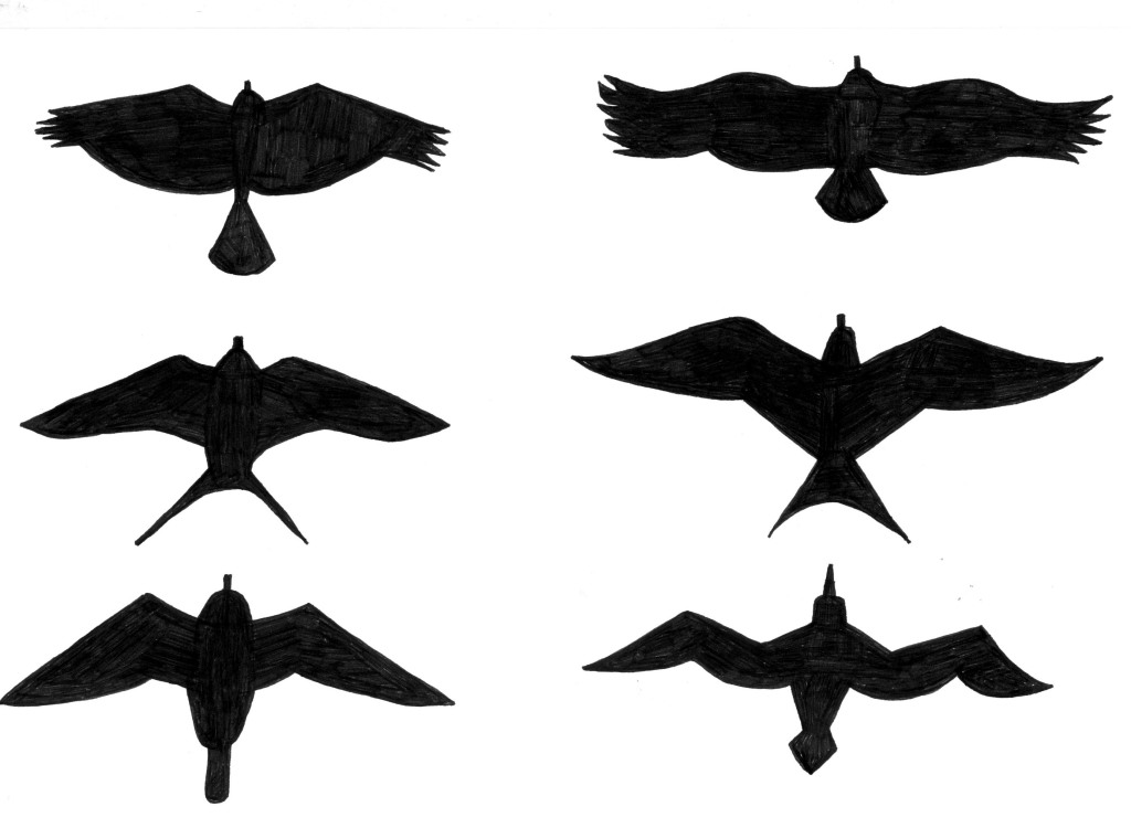 wing span diagram black and whtie