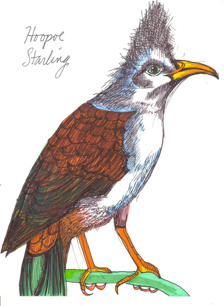 hoopoe starling
