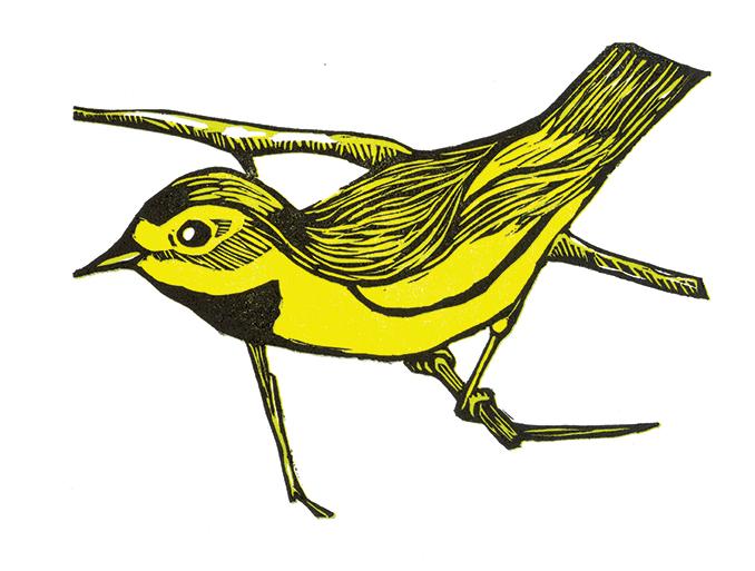 Bachmans Warbler woodcut