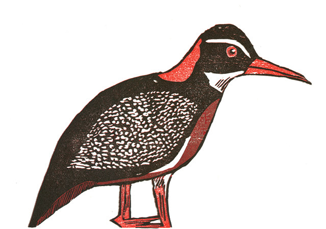 Red Billed Rail