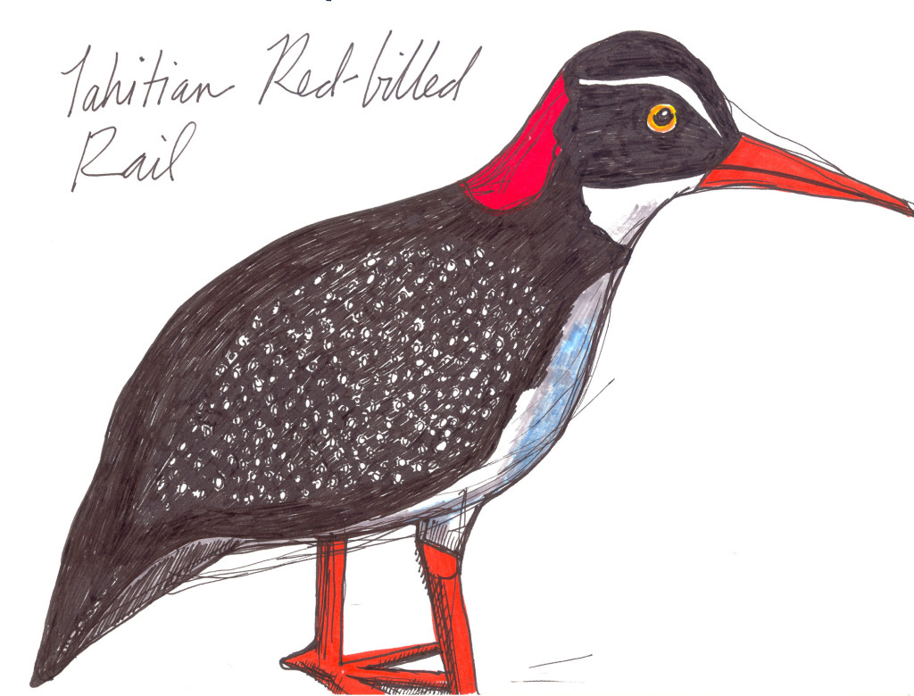 Tahitian Red Billed Rail