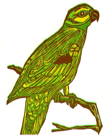seychelles parakeets_web