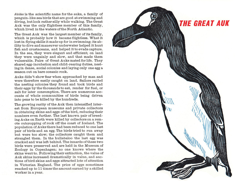 the great auk_spread